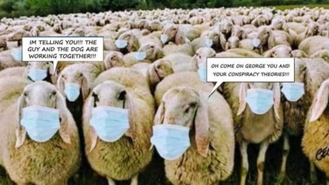 The Sheep Are Leading The Flock to Slaughter
